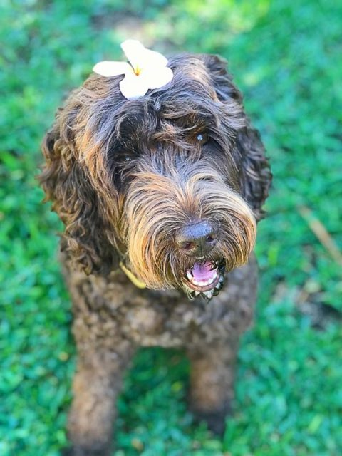 Happy dog with flower on head