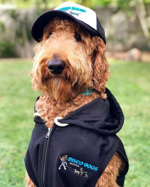 Dog wearing Disco Dogs Noosa hat and jumper