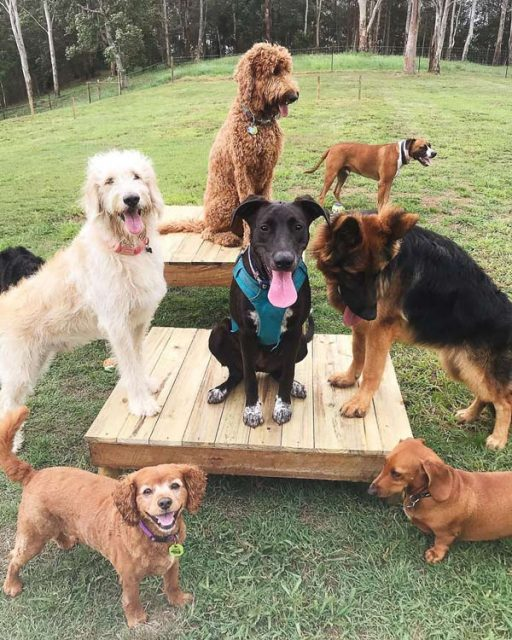 Group of dogs on and around platforms
