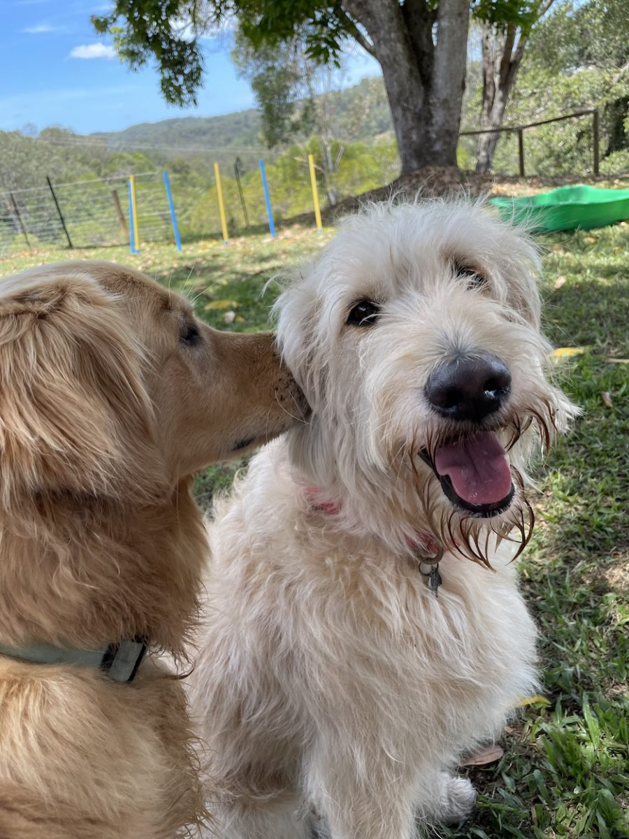 Happy dog with another dog smelling ear