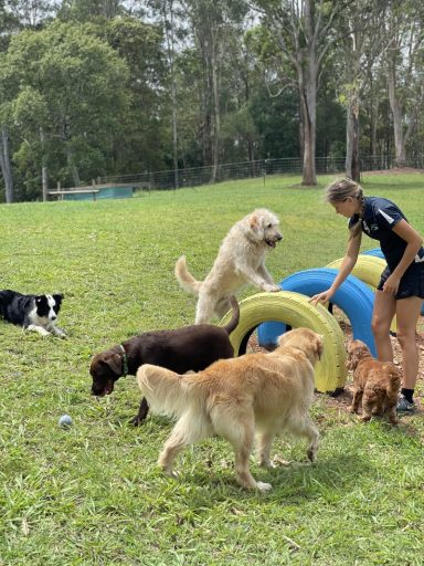 Dog trainer teaching dogs to play with tyre obstacles