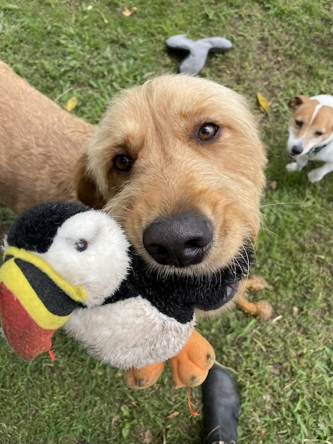 Dog playing with plush toy