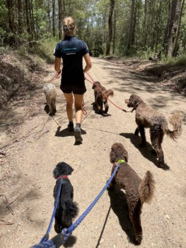 Dog walker with lots of dogs on lead